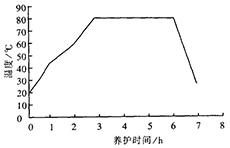 蒸汽养护温度曲线